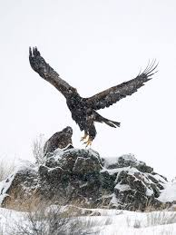 Eagles in the Storm-short stories